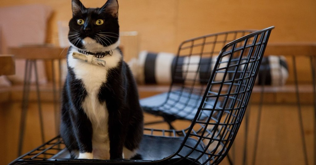 The Cats at Capitol Hill's Temporarily Closed Neko Cafe Basically Run the Place Now