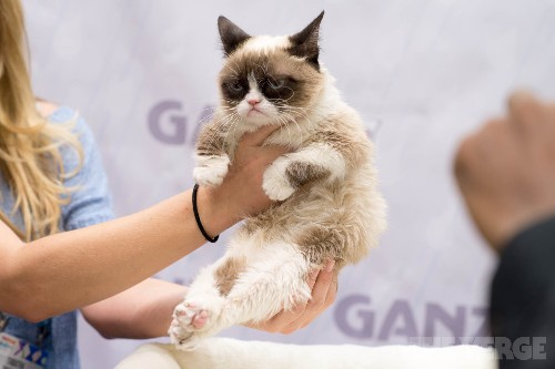 Grumpy Cat, whose grumpiness brought joy to the internet, has died