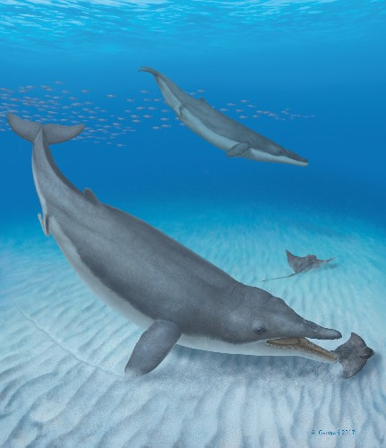 This ancient whale likely sucked prey into its mouth like a giant vacuum cleaner