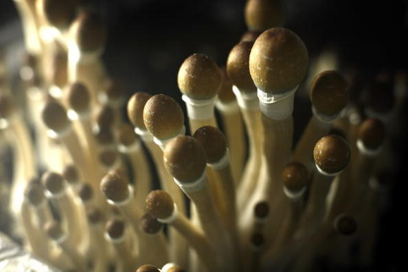 Why psychedelic drugs could transform how we treat depression and mental illness