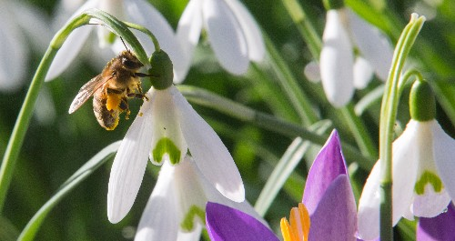 Norway's capital city is building a highway for bees
