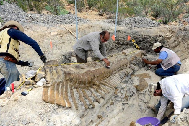 72 million-year-old dinosaur tail unearthed in nearly perfect condition