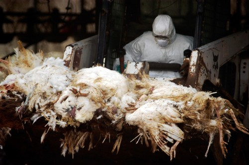 Bird flu victims report no contact with poultry as virus continues to spread