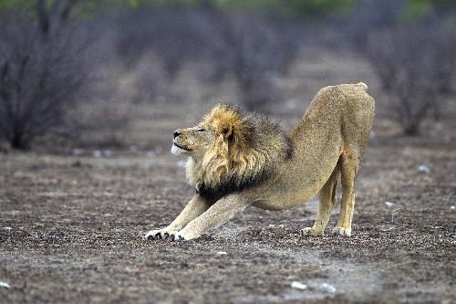 Killing off wild predators is a stupid idea