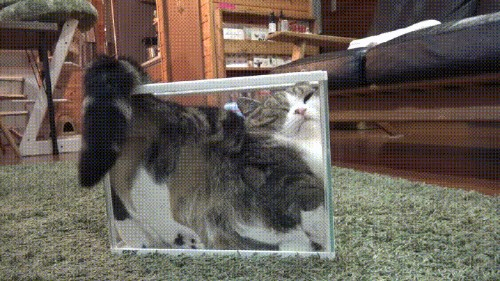 Gifs That Prove Cats Are Actually Liquids