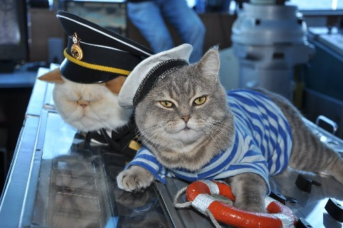 Meet the cat captain and first mouser of your Russian river cruise