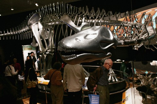 The Verge Review of Animals: the Apatosaurus