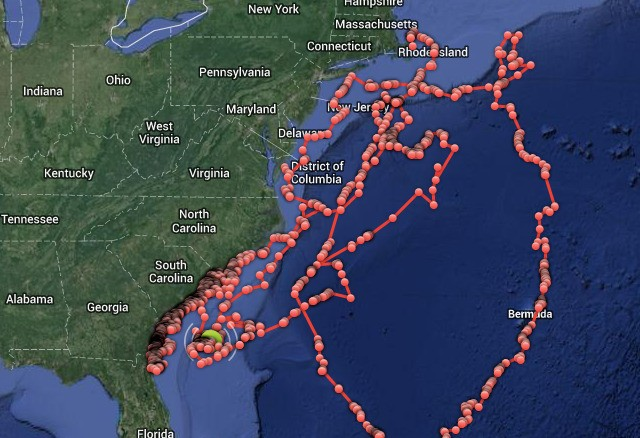 You can now track sharks off the East Coast in real time