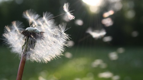 Google X unveils new company for geothermal energy, Dandelion