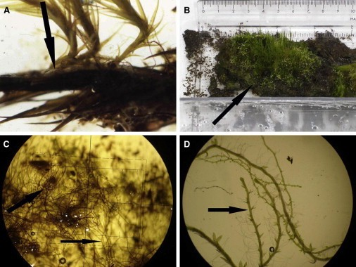 Researchers revive moss trapped in Antarctic ice for 1,600 years