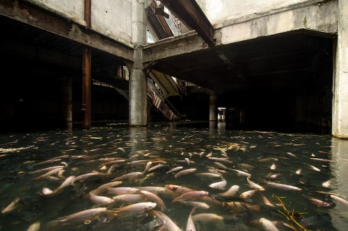 An abandoned mall in Bangkok has been overtaken by fish