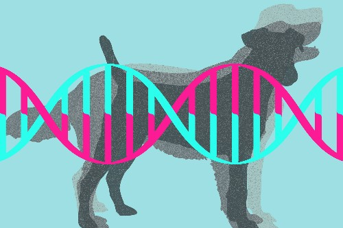 Doggie DNA startup wants to learn about human diseases from dog drool