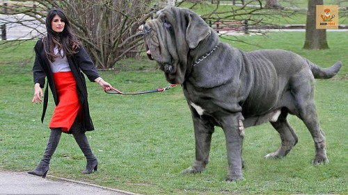 Pets: Top 10 Most Dangerous Dog Breeds in the World