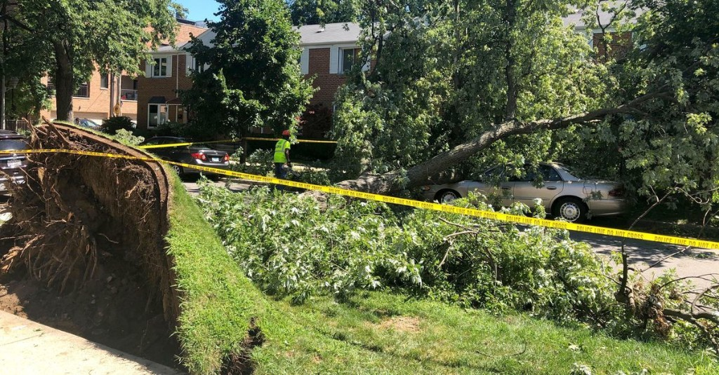 North Side neighborhoods clean up after storm, tornado down trees