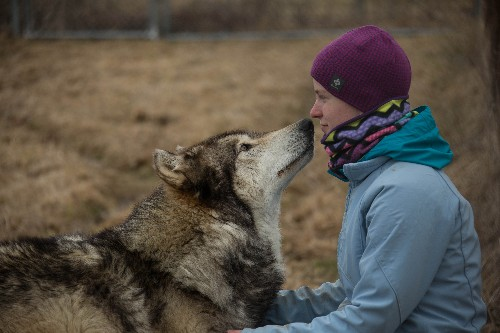 Why do dogs love us? Geneticists hunt for DNA clues