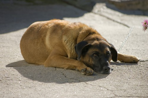 Dogs in Berlin are overdosing on drug addicts' feces