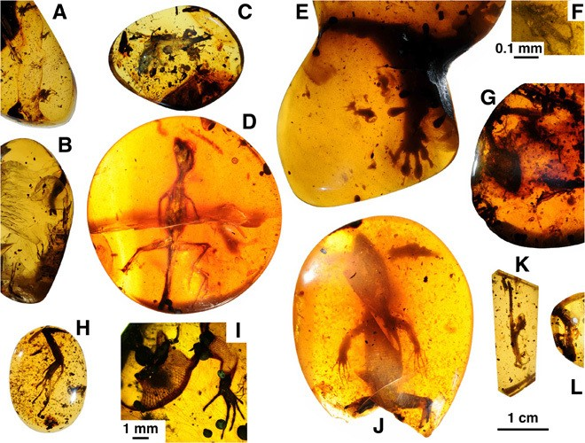 Baby lizard spends 99 million years in amber, doesn't cause Jurassic Park to happen IRL