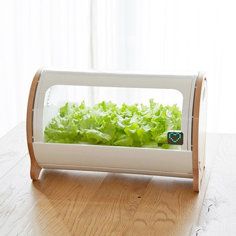 Foop is a hydroponic garden for your abrasive city life
