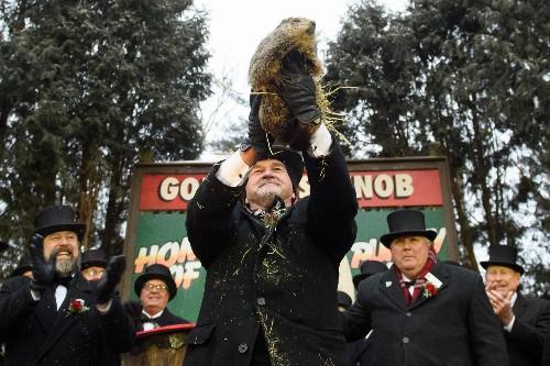 Punxsutawney Phil should be replaced with AI groundhog, says PETA
