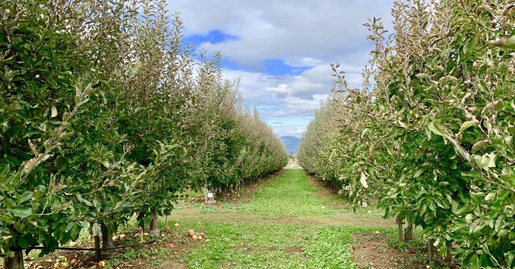 Stellar Portland-Area U-Pick Farms for Fall Produce