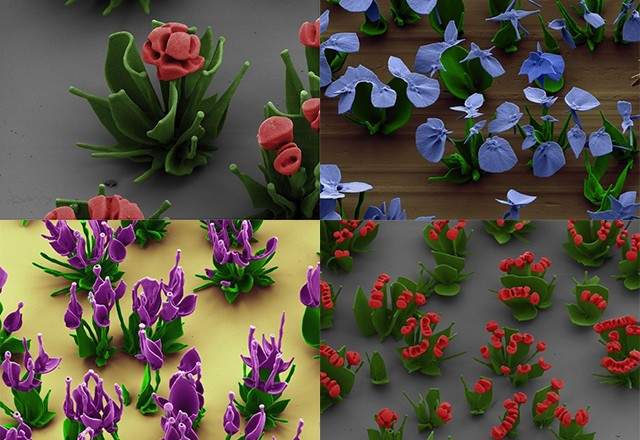 Complex crystal 'flowers' self-assemble with chemical manipulation