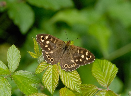 Climate change may mean vanishing act for UK butterflies