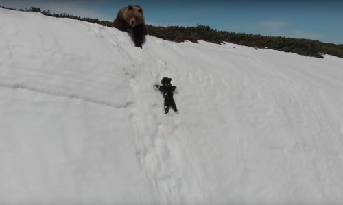 That adorable baby bear clip captures the dark side of wildlife videos
