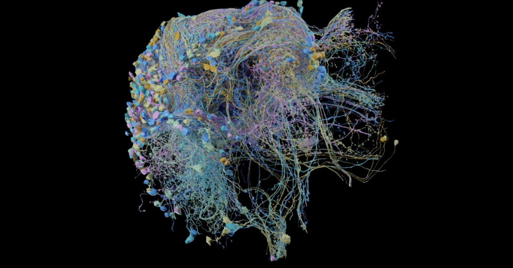 Google publishes largest ever high-resolution map of brain connectivity