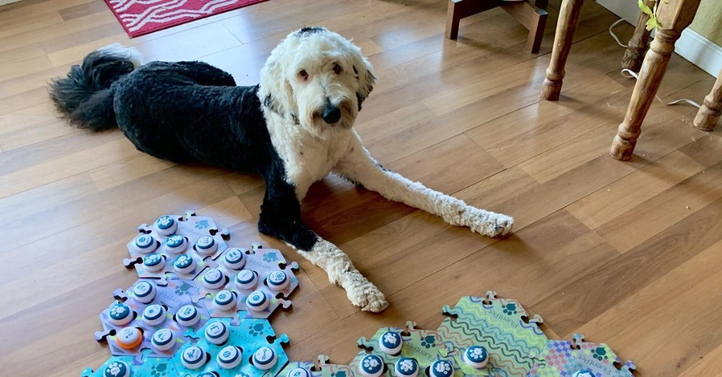 How Bunny the dog is pushing scientists' buttons