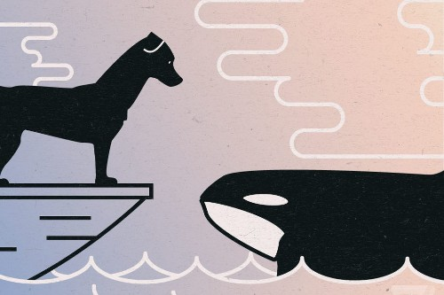Fecal finders: how poop-sniffing dogs are helping killer whales