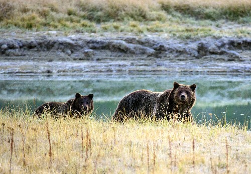 Weakening the Endangered Species Act could harm humans, too