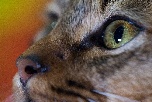 """The uproar over the New Yorker short story """"Cat Person,"""" explained"""