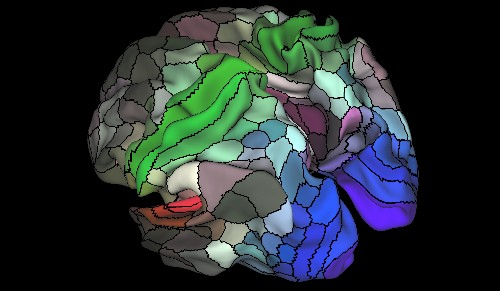 This new brain map shows almost 100 areas never described before