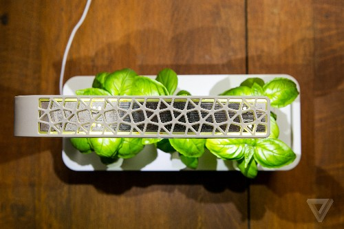 This smart garden turned me into the laziest gardener ever