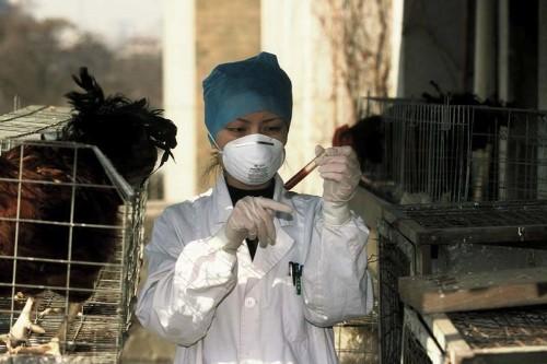 Canada reports the first H5N1 avian flu fatality in North America