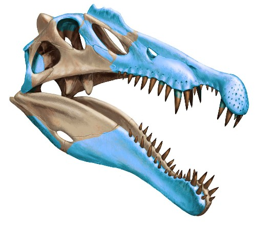 The largest predatory dinosaur ever was 'half-duck, half-crocodile'