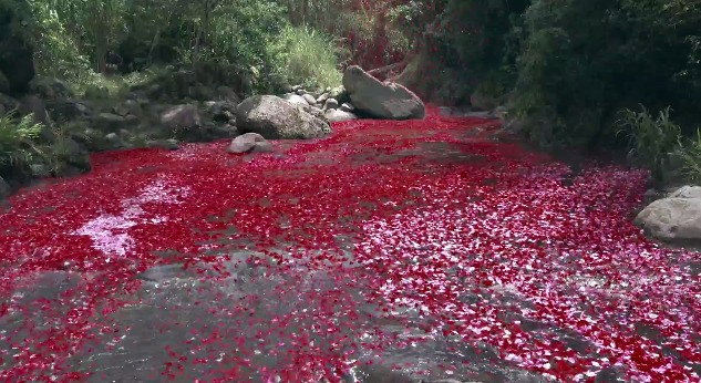 Sony launches 8 million flower petals from a volcano to promote its 4K TVs