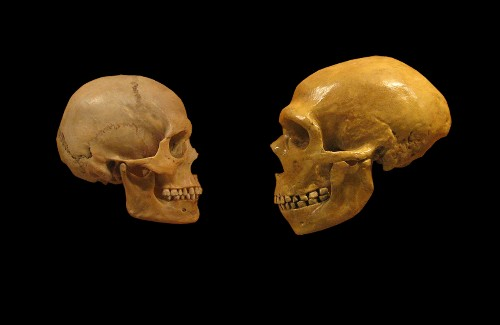 What ancient DNA tells us about humans and Neanderthals