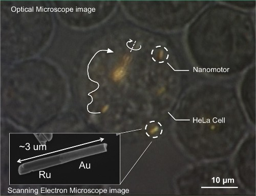 Nanomotors controlled inside living human cells for the first time