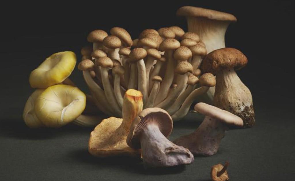 Mushrooms cover image