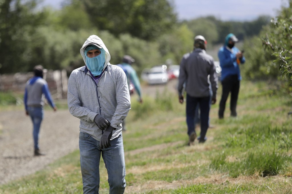 Coronavirus forces economic reckoning in central Washington's cherry country