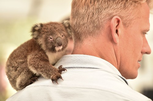 There's a glimmer of hope for Australia's wildlife
