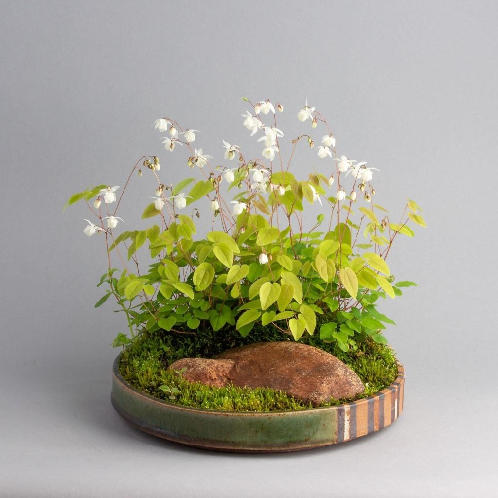 Kusamono: The softer side of bonsai