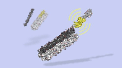 The 'dawn' of designer proteins: Biologists build a protein that turns cells on and off