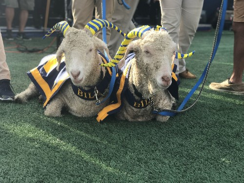 To prevent goat-napping, Navy ups security around mascots to protect against Army bandits