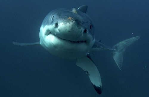 Shark scientists explain what's right and what's wrong with Shark Week