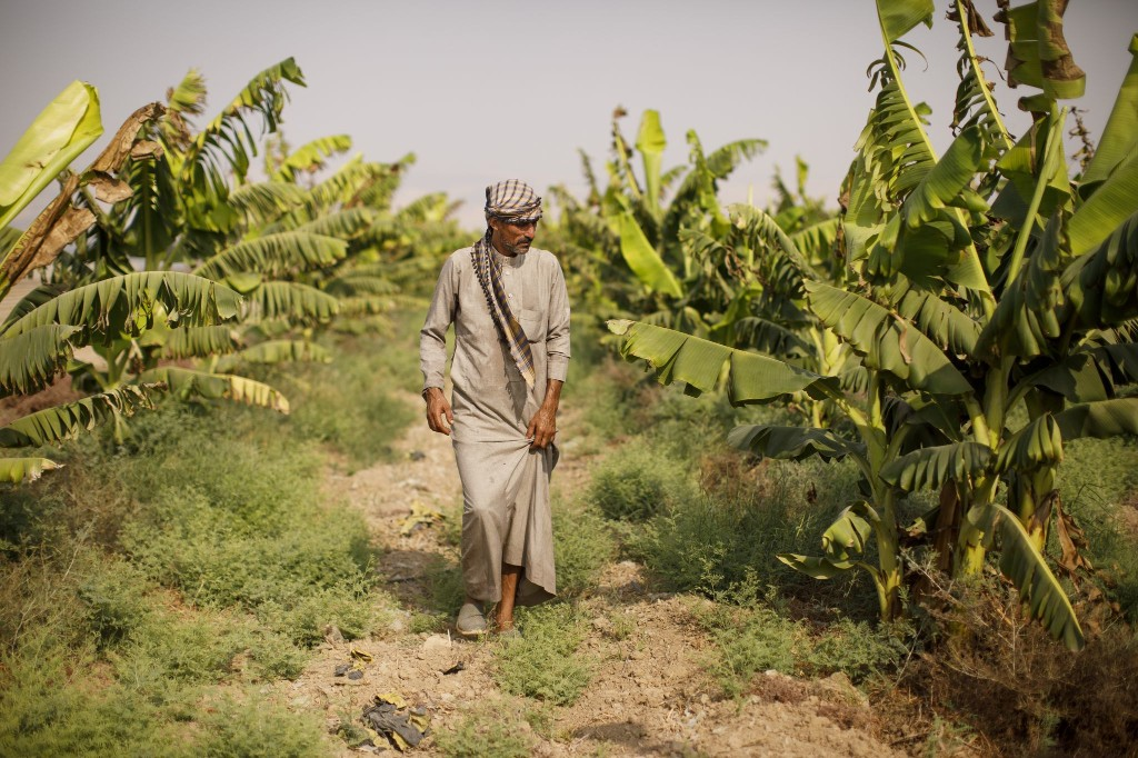 The famed 'Jericho banana' is vanishing. Under Israeli occupation, there's not enough water.