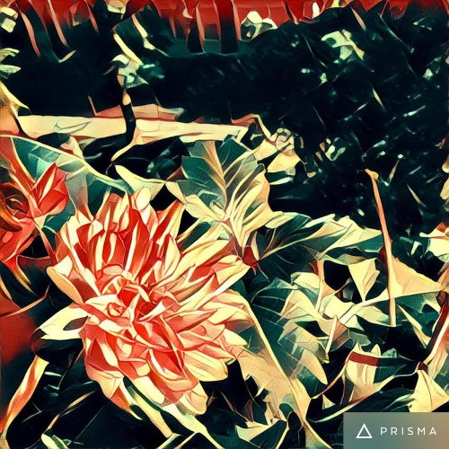 What is Prisma, the stunning photo app that conquered Instagram?