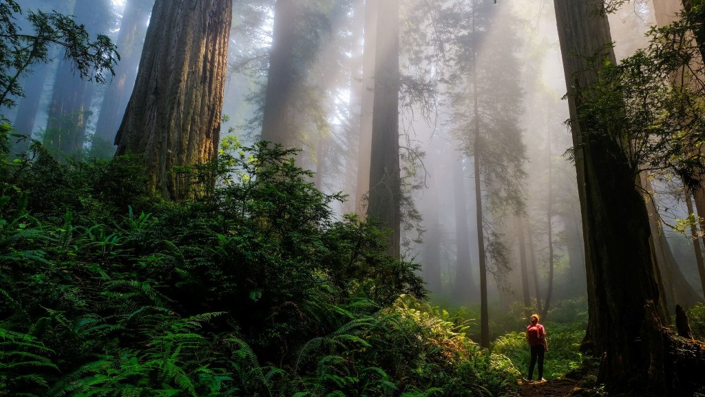 If you can't get to a national park, appreciate their beauty with these 11 photos