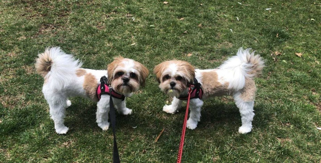 When is the best time to clone your dog?